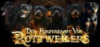 dkv-rottweilers-rottweiler-puppies-for-sale-background-dkv-rottweilers-black-fire-rottweilers-1000w-470h.jpg