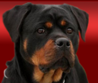 German Rottweiler breeder in Missouri with Rottweiler puppies for sale.png