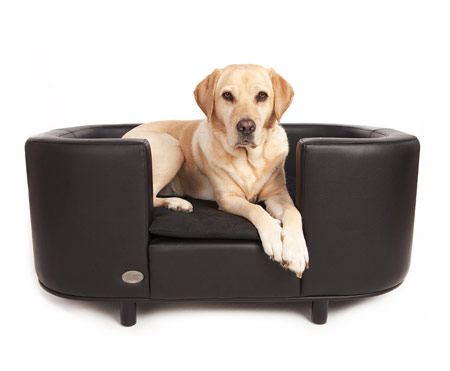 When to Buy Dog Furniture CaninePlanet