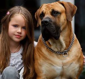 Dog Personality Nature Or Nurture