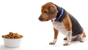 Dog Food Lose Weight