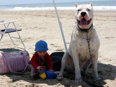 Temperament Is A Dogo Right For Your Family