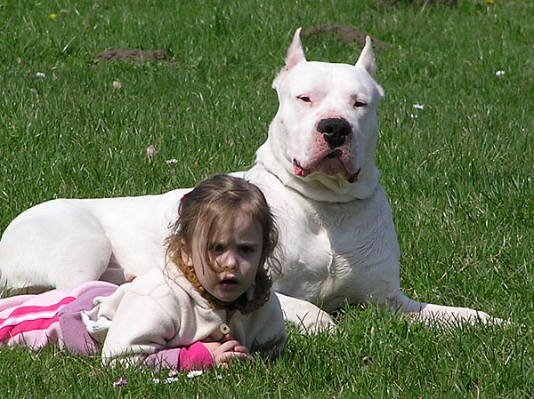 Know Your Dogo Argentino's Temperament - CaninePlanet.net